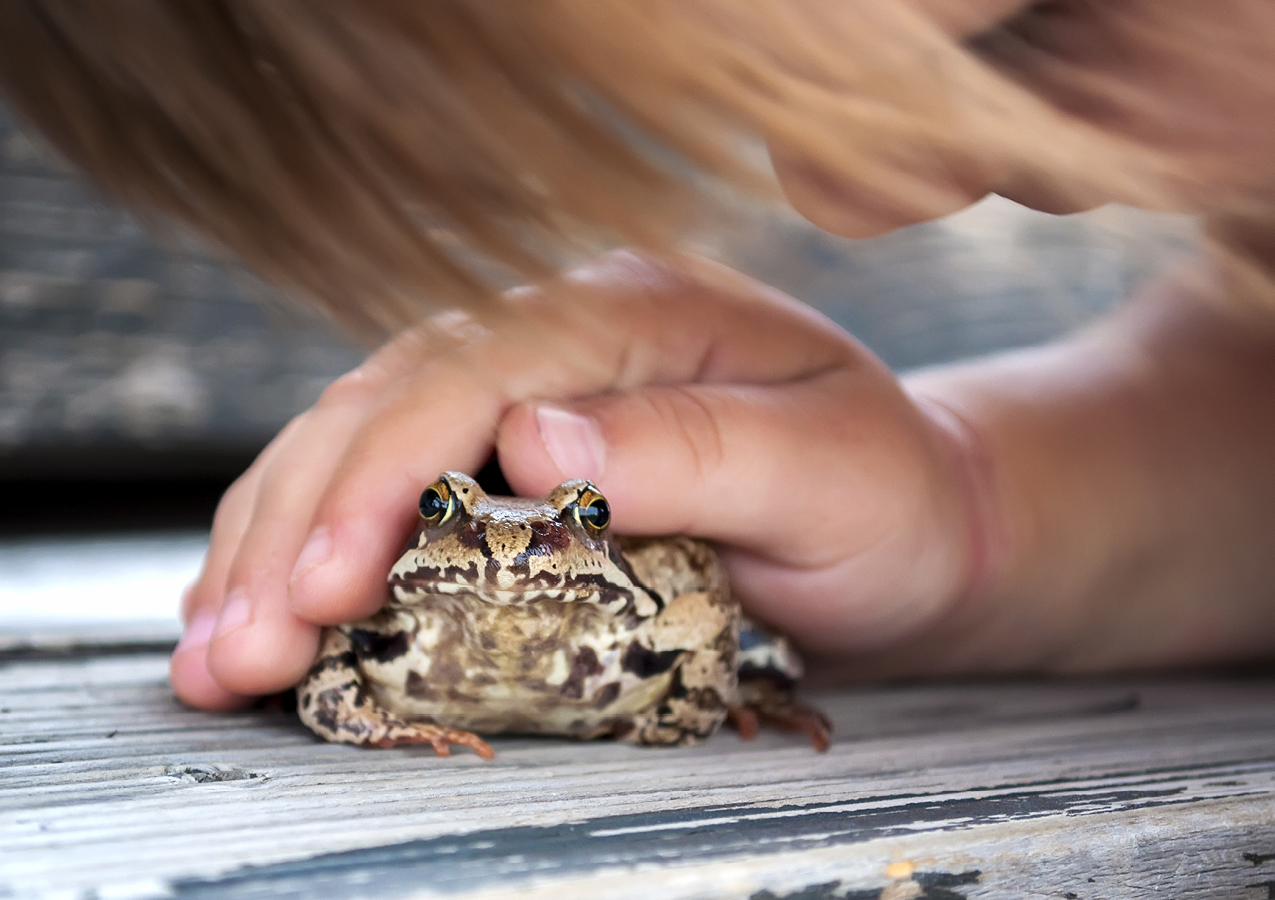 18 Books About Frogs Amp Toads For Kids With Autism