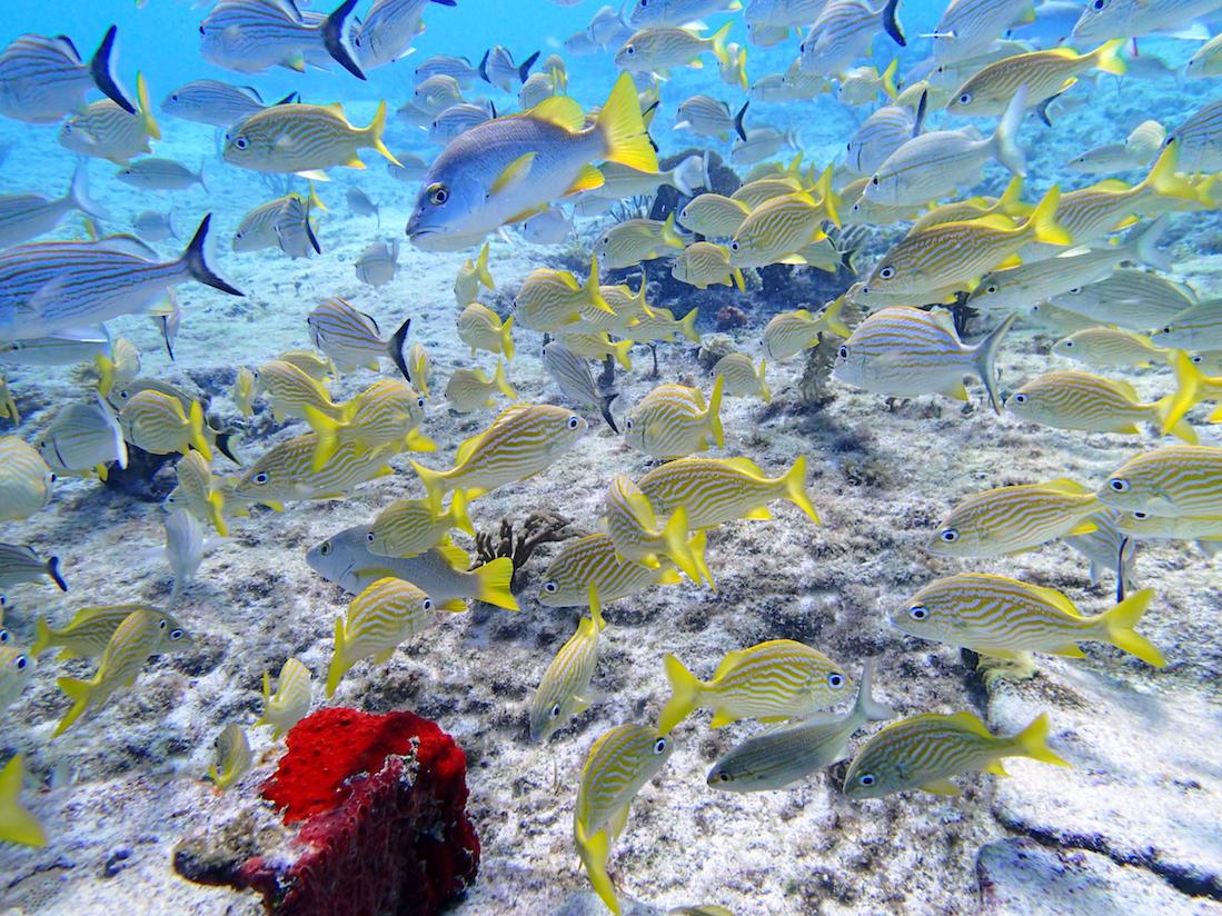 MUSA Underwater Museum