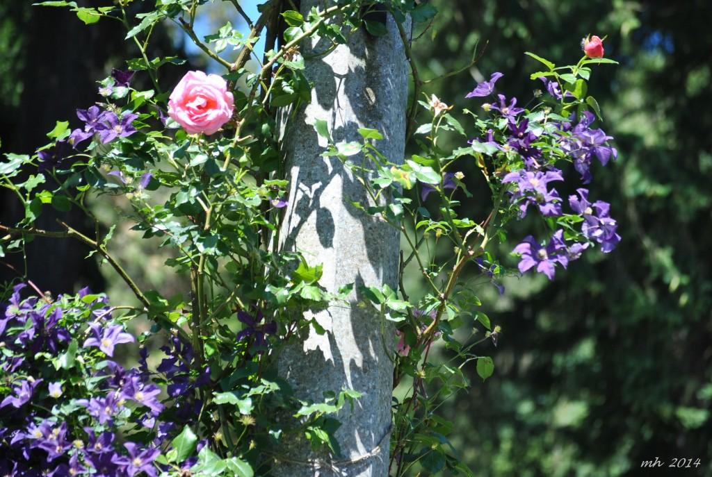 Rose Garden 2014 (66)