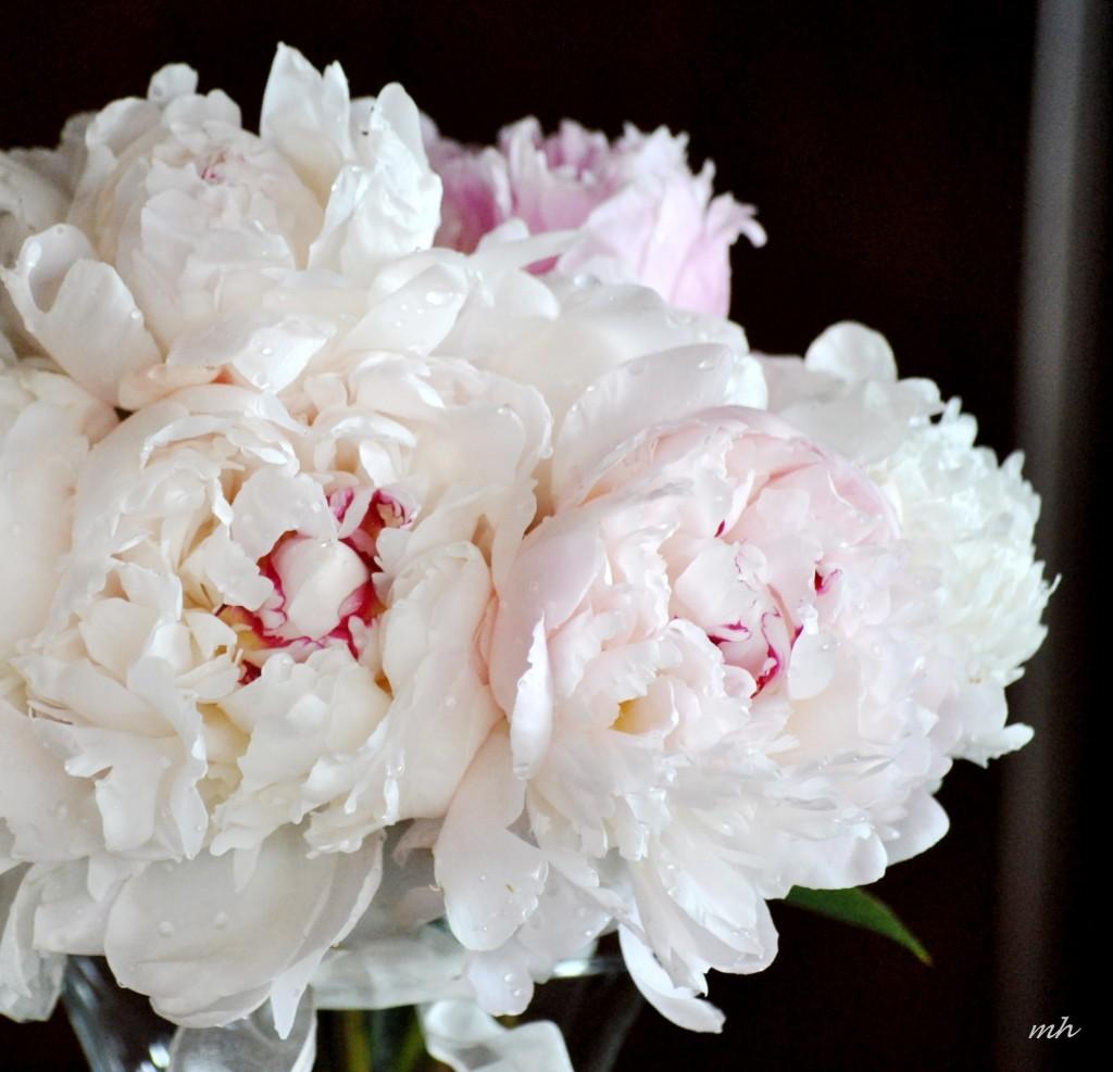 Hoa Mẫu Đơn 2014   (4)