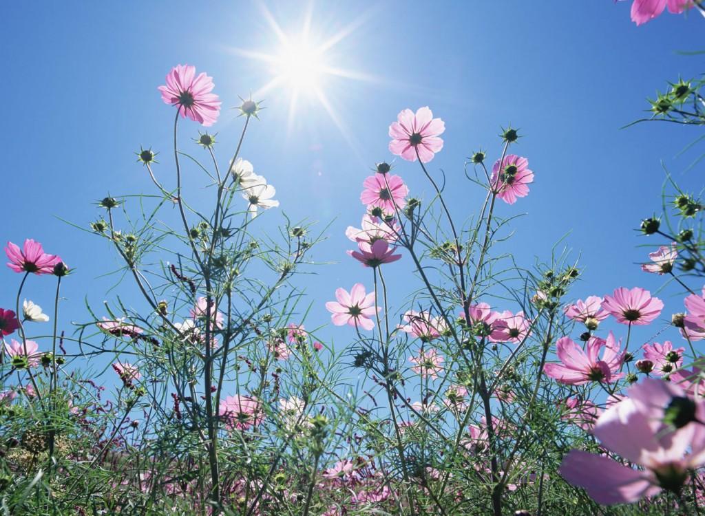 Flower (263)