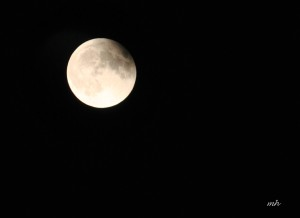 Lunar Eclipse Sept 27 - 2015 (6)