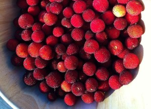 Bowl_of_Strawberry_Tree_berries