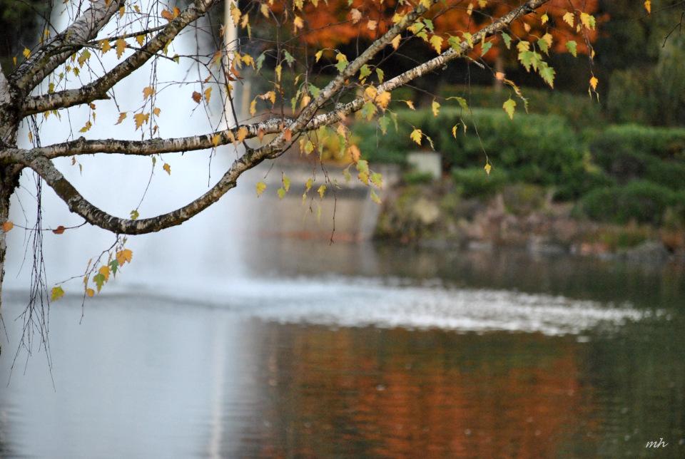 Autumn 2015 (mh) (16)