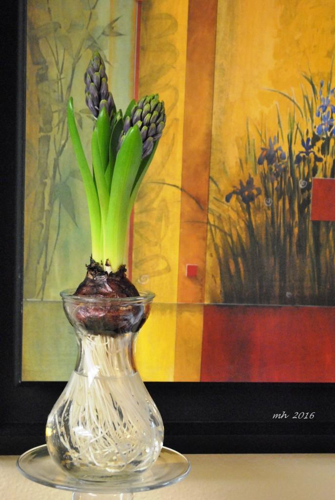 The Hyacinthaceae (Da Lan Huong) (mh) (3)