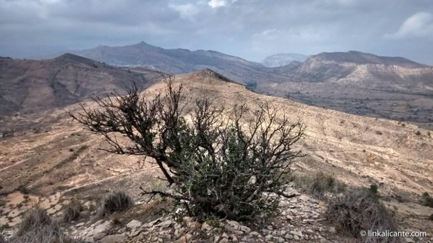 Tossal Reó - Senderismo San Vicente del Raspeig