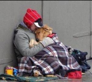 foto articolo barbone e cane