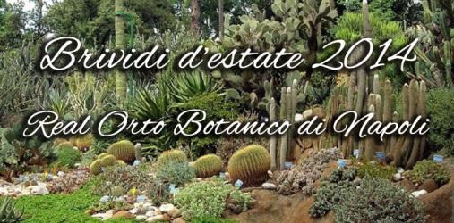 Brividi-destate-20141