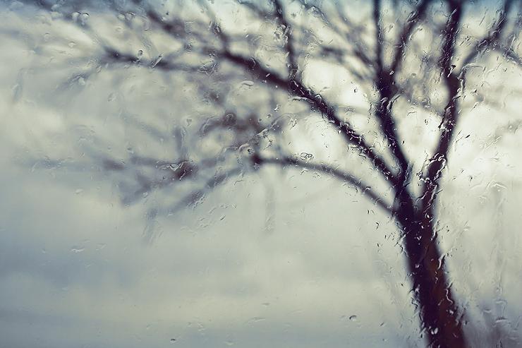 Tree behind water