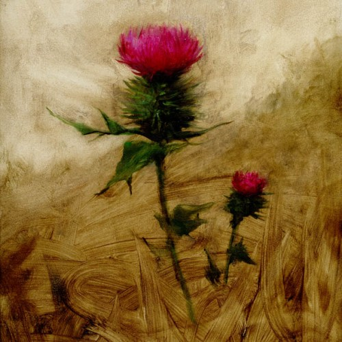 Thistle by Michael Klein