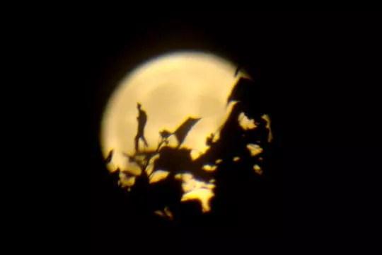 le marcheur de la lune