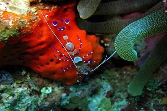 dans la réserve cousteau