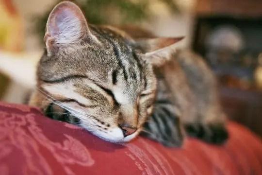 chat et sommeil