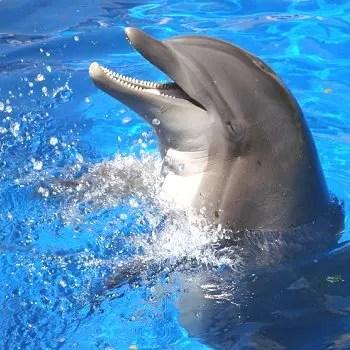 pour le dauphin, la pêche est un jeu