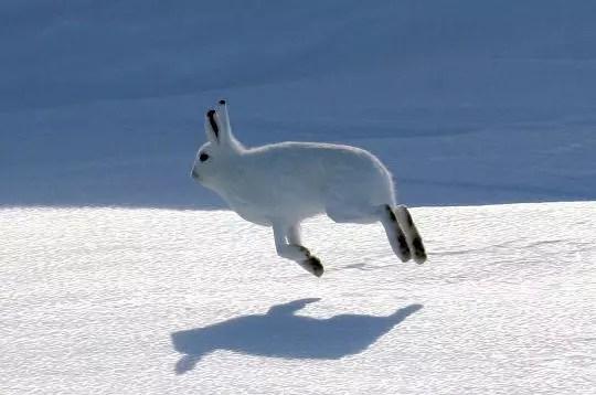 La vie animale nuage ciel d 39 azur - Animaux pole nord ...