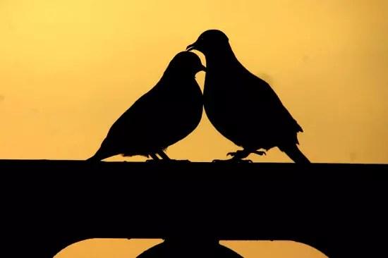 Mon soleil dans Mes poemes amour-tourterelle-240303