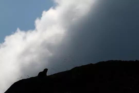 la silhouette de la marmotte