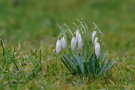 ambassadrices du printemps