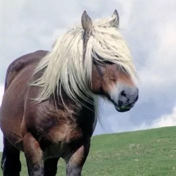 du grain pour toi, cheval.