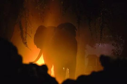 sur les traces des éléphants