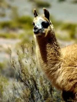 monts et merveilles de patagonie