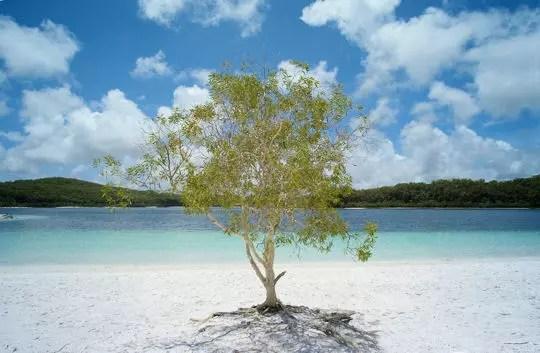 le lac mckenzie