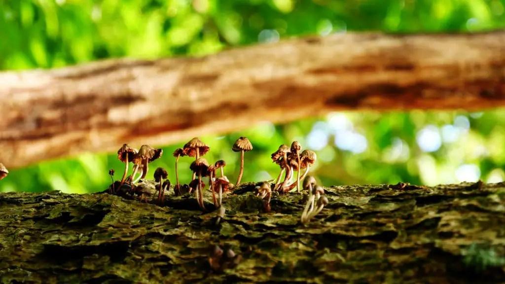 ahalman-MushroomsJapan fedora wallpaper