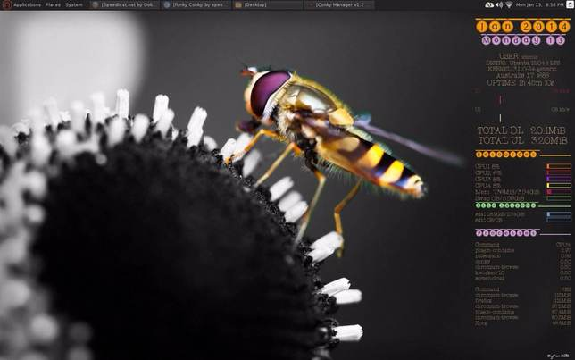 bee conky for linux