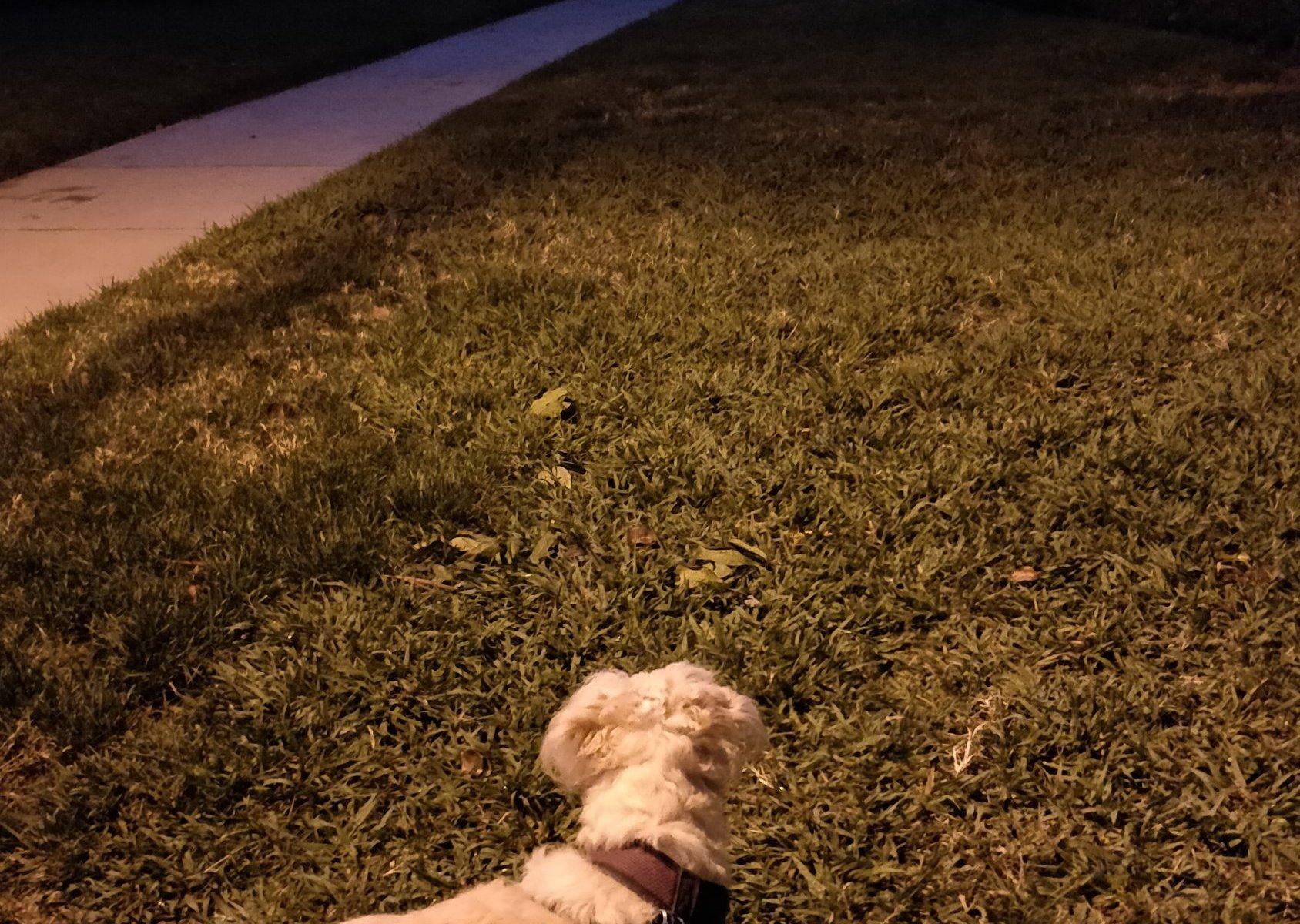 Lilo staring down the sidewalk