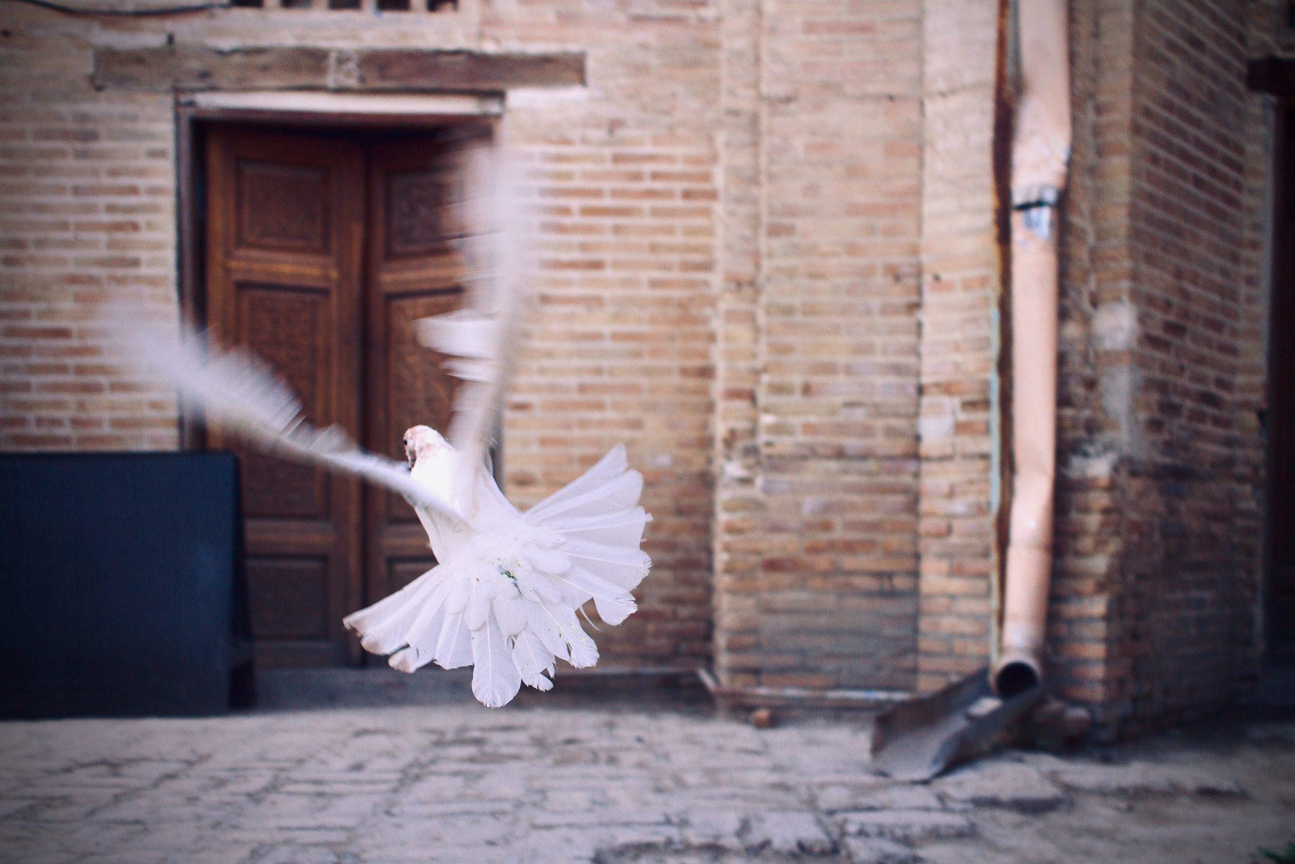 Dove flying away. Photo by Jarek Šedý on Unsplash