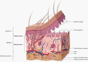 How Cosmetic Acupuncture Works | Kim Peirano, LAc  Lion's