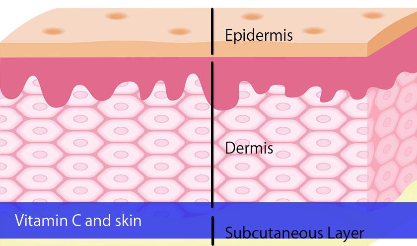 Vitamin C and Skin