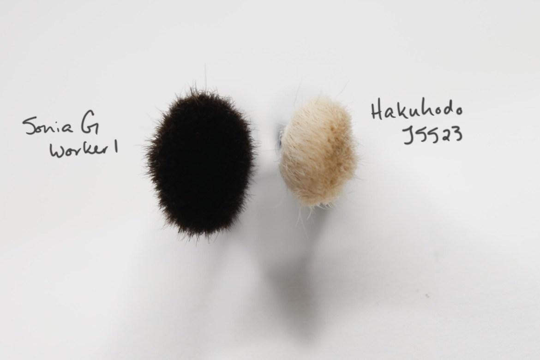 Sonia G Worker 1 vs Hakuhodo J5523