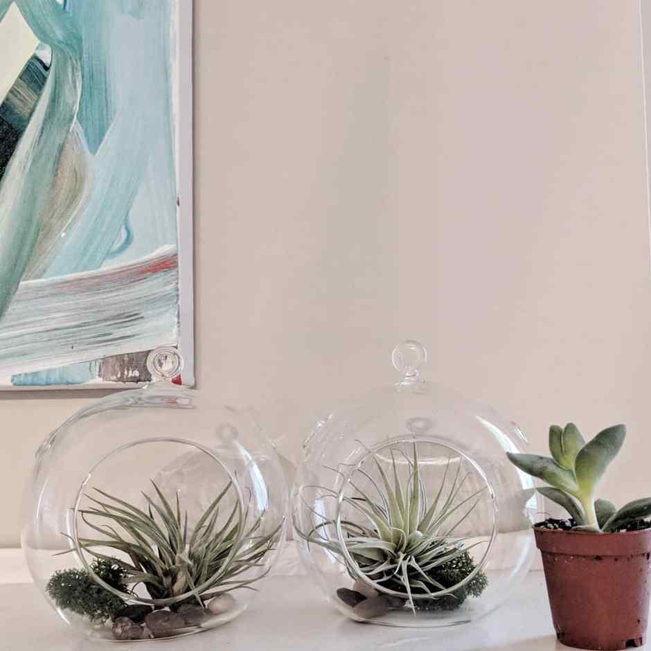 Five Ways to Kill Houseplants