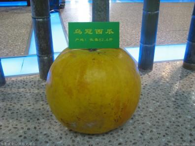 六十多斤的西瓜