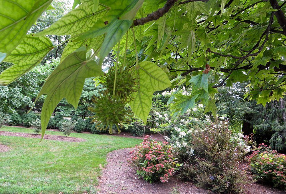 Chadwick Arboretum in Columbus Ohio