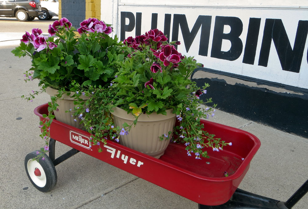Martha Washington geraniums in planters sitting in a child's red wagon