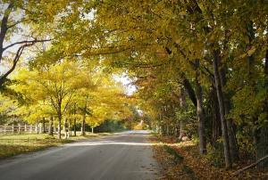 Arching branches of gold, yellow, and orange leaves form a tunnel of color along a dirt Michigan backroad.