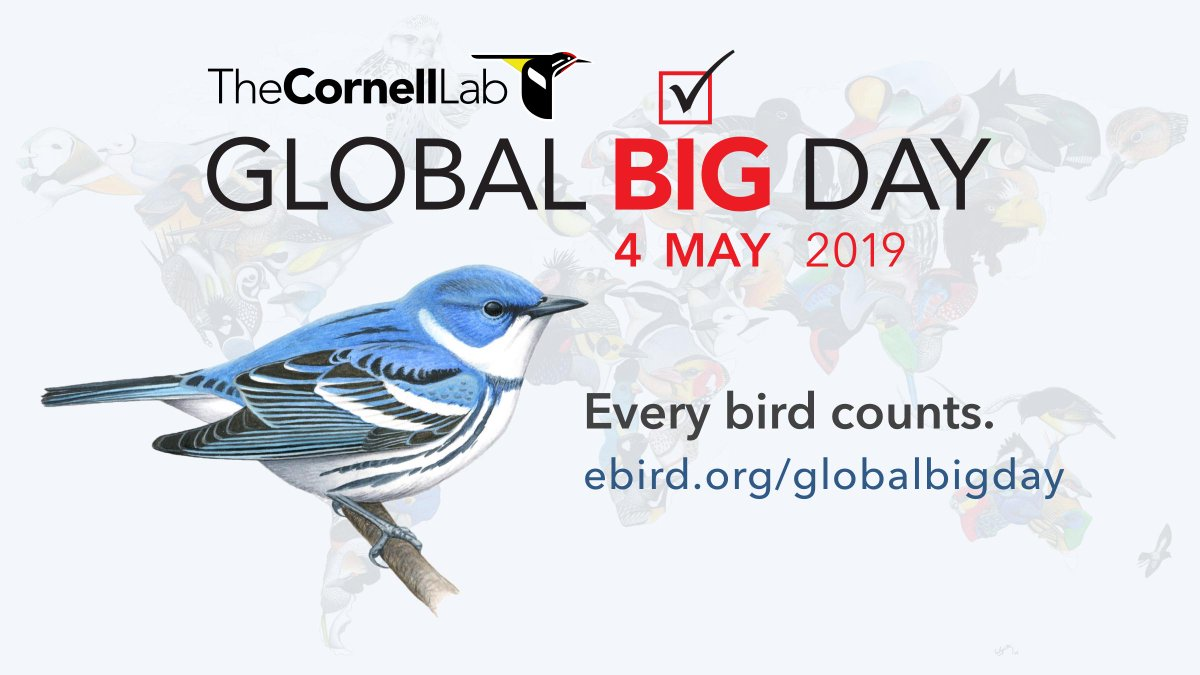 Global Big Day: 4 May 2019, Every bird counts.