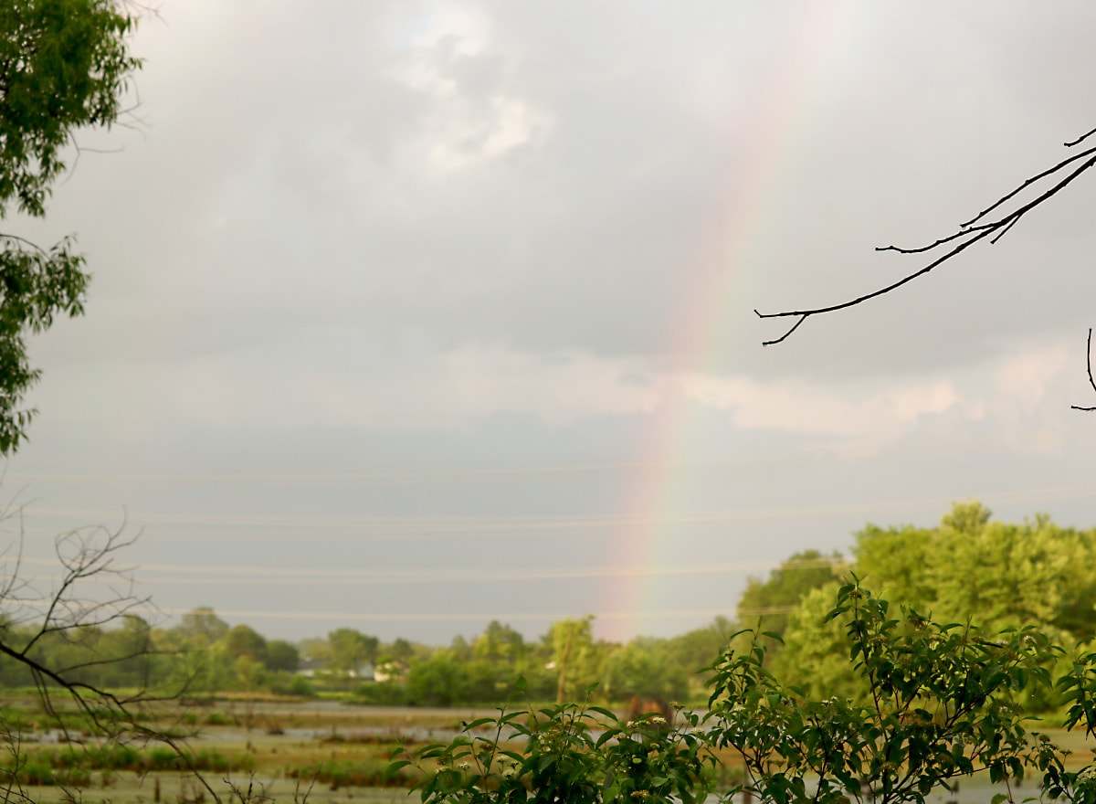 Pink, green, and yellow rainbow lights up the gray, cloudy sky ; the marsh and green shade trees in the foreground