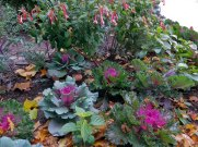 Impressed that these flowers and ornamental kale weren't affected by the cold weather this week