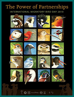 Bird collage calendar