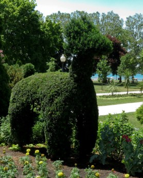 llama evergreen topiary in Coventry Garden