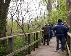 birders on the Magee Marsh boardwalk