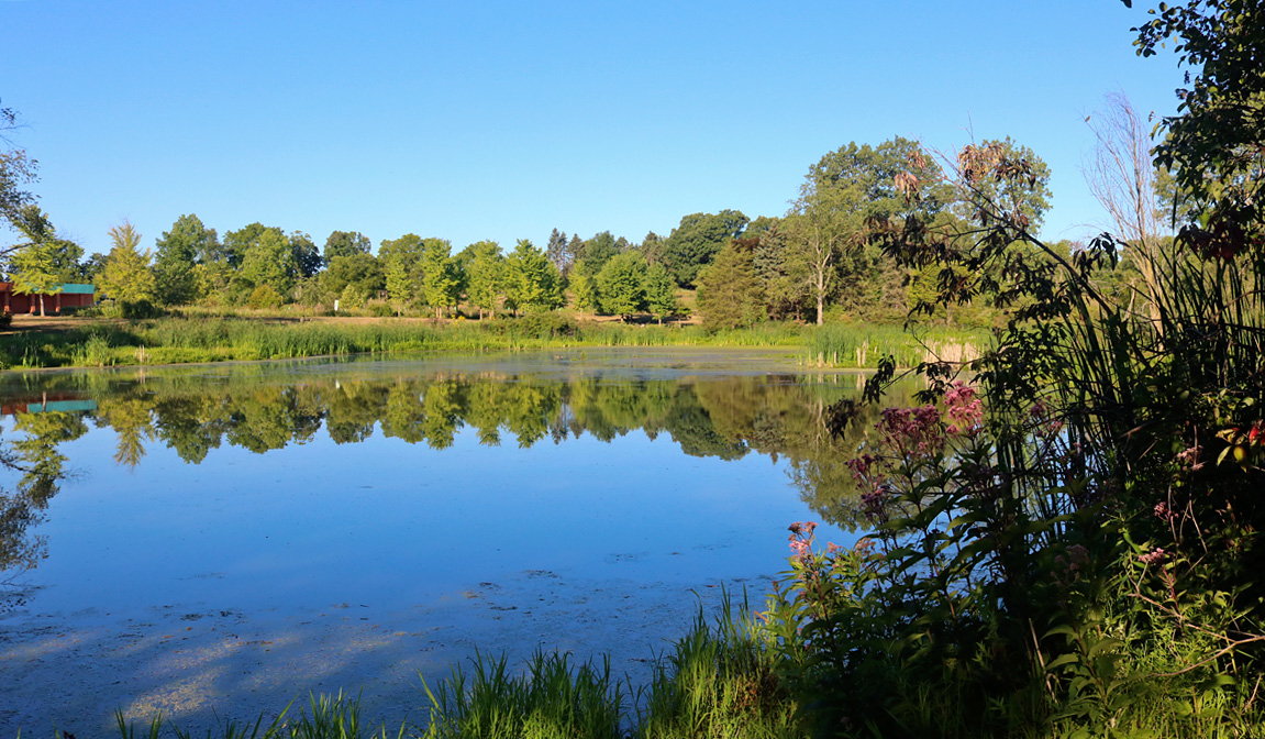 Early Morning View Of Willow Pond At Matthaei Botanical Gardens