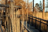 Decorative grasses line the walkway at Newburgh Pointe
