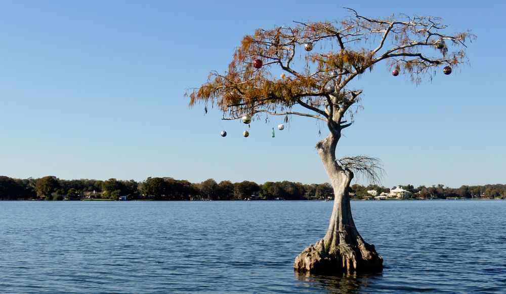 Cypress tree decorated with Christmas ornaments in the middle of Lake Osceola in Winter Park, Florida