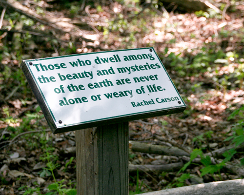 Rachel Carson quote on a trail sign along boardwalk