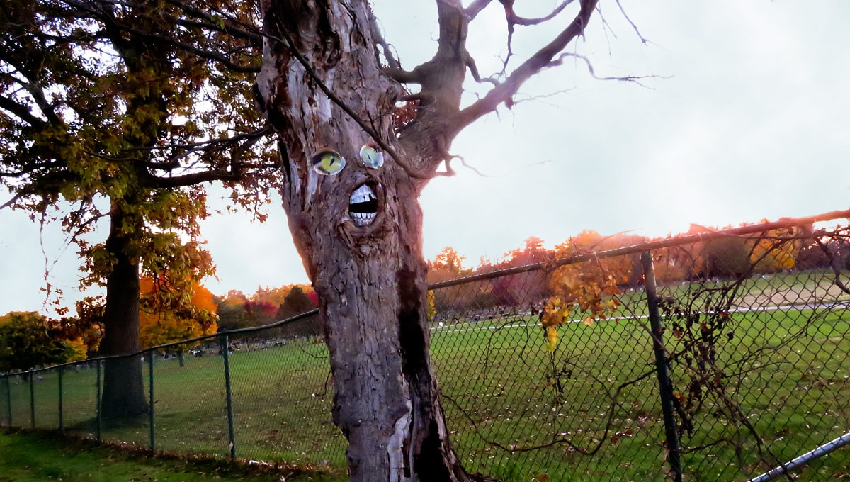 Photo of the Week: Have You Seen the Scary Tree in Ypsilanti?