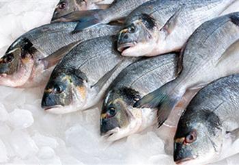 Ψάρια Τσιπούρες